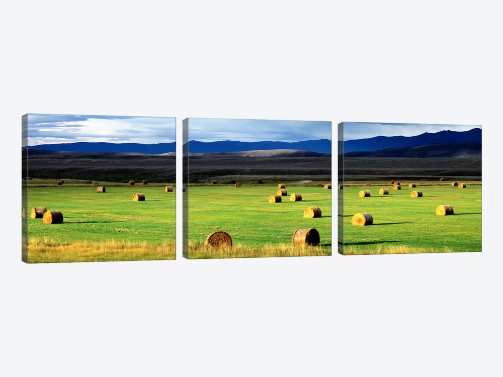 Field Of Haystacks, Jackson County, Colorado, USA by Panoramic Images 3-piece Canvas Art