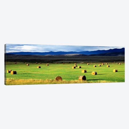 Field Of Haystacks, Jackson County, Colorado, USA Canvas Print #PIM2075} by Panoramic Images Canvas Art Print