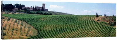Vineyards and Olive Grove outside San Gimignano Tuscany Italy Canvas Print #PIM2119