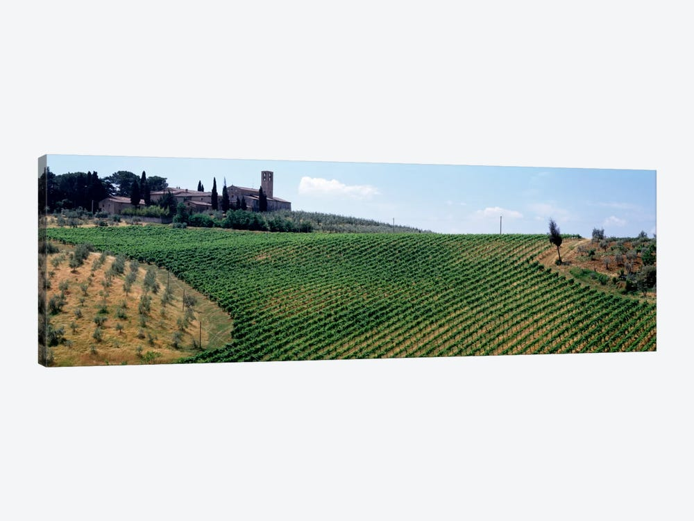 Vineyards and Olive Grove outside San Gimignano Tuscany Italy by Panoramic Images 1-piece Canvas Art Print