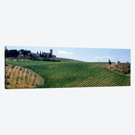 Vineyards and Olive Grove outside San Gimignano Tuscany Italy Canvas Print #PIM2119} by Panoramic Images Canvas Print