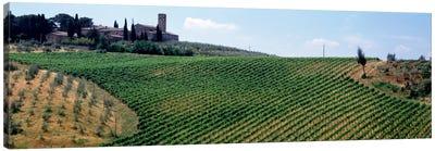 Vineyards and Olive Grove outside San Gimignano Tuscany Italy Canvas Art Print