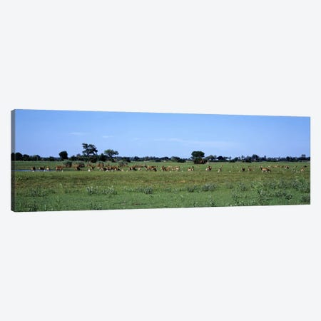 Red Lechwee Moremi Game Reserve Botswana Africa Canvas Print #PIM2136} by Panoramic Images Canvas Wall Art
