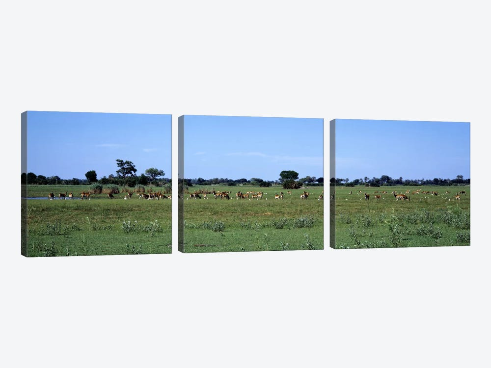 Red Lechwee Moremi Game Reserve Botswana Africa by Panoramic Images 3-piece Canvas Artwork