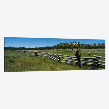 Two horses in a field, Arizona, USA Canvas Print #PIM213} by Panoramic Images Canvas Print