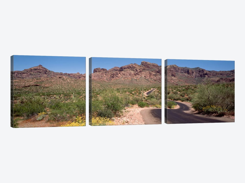 Cacti-Laden Desert Trail, Organ Pipe Cactus National Monument, Pima County, Arizona, USA by Panoramic Images 3-piece Art Print