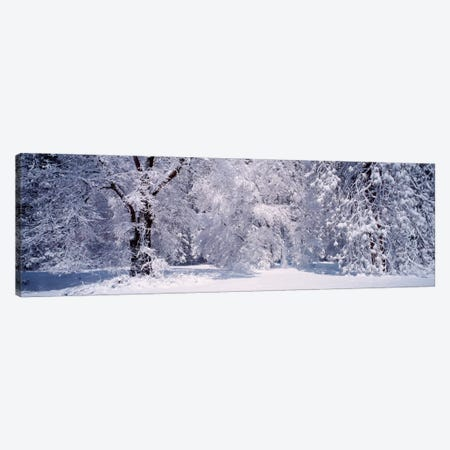 Snowy Winter Landscape, Yosemite National Park, California, USA Canvas Print #PIM217} by Panoramic Images Canvas Art