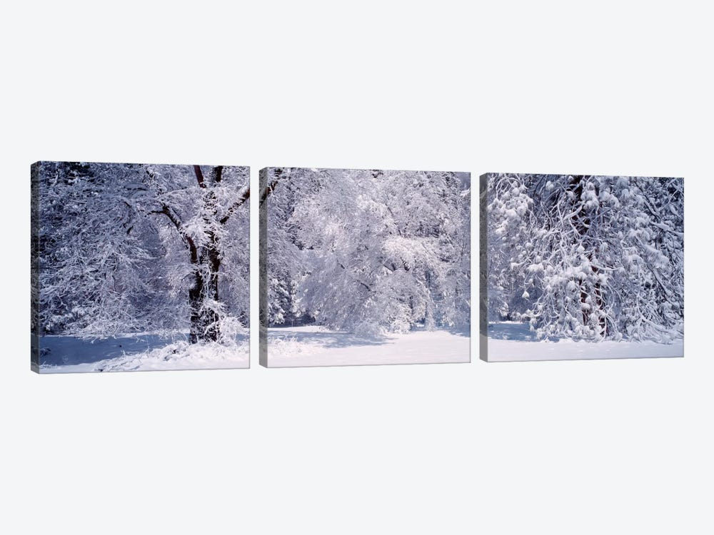 Snowy Winter Landscape, Yosemite National Park, California, USA by Panoramic Images 3-piece Canvas Art Print