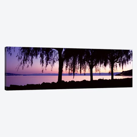Weeping Willows, Lake Geneva, St Saphorin, Switzerland Canvas Print #PIM2197} by Panoramic Images Canvas Art