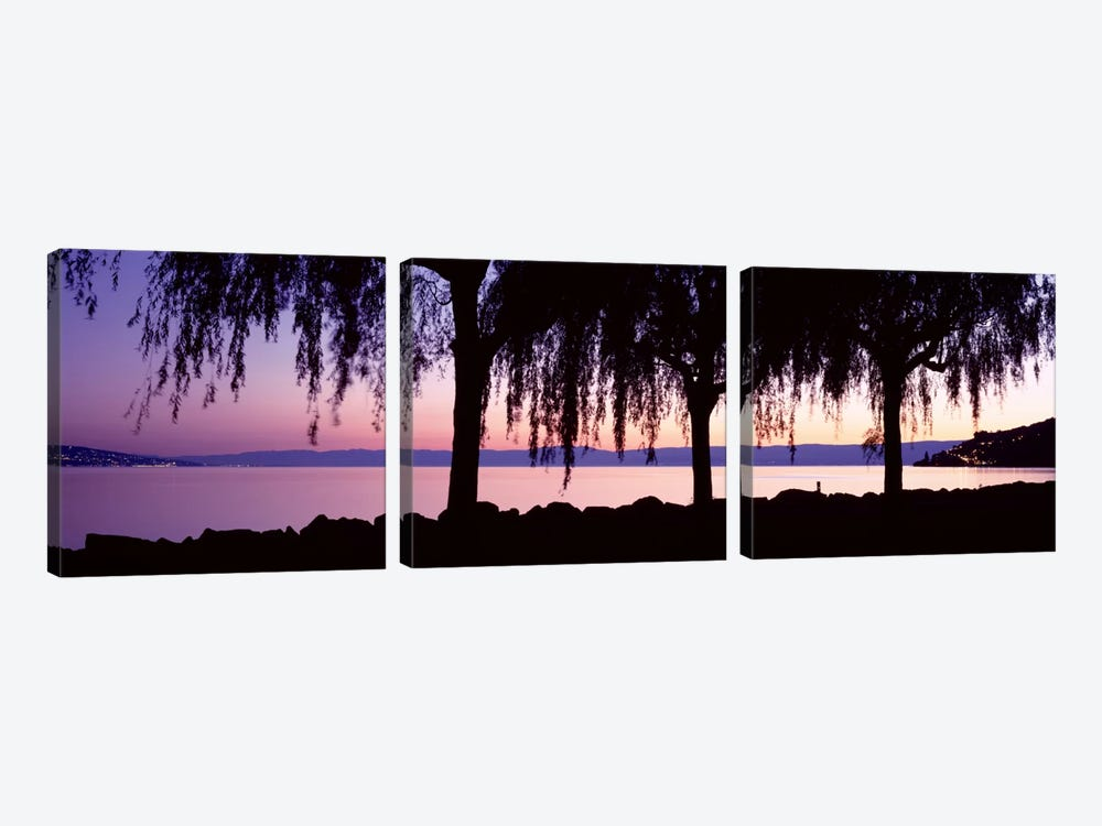 Weeping Willows, Lake Geneva, St Saphorin, Switzerland by Panoramic Images 3-piece Canvas Print