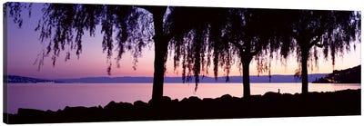 Weeping Willows, Lake Geneva, St Saphorin, Switzerland Canvas Art Print