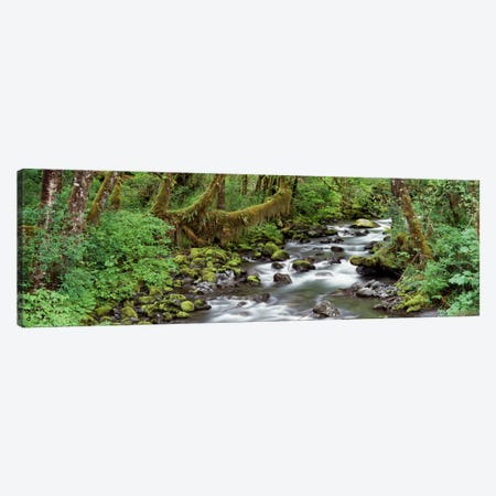 Creek Olympic National Park WA USA Canvas Print #PIM2209} by Panoramic Images Canvas Art Print