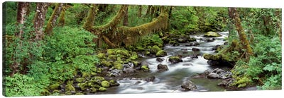 Creek Olympic National Park WA USA Canvas Art Print
