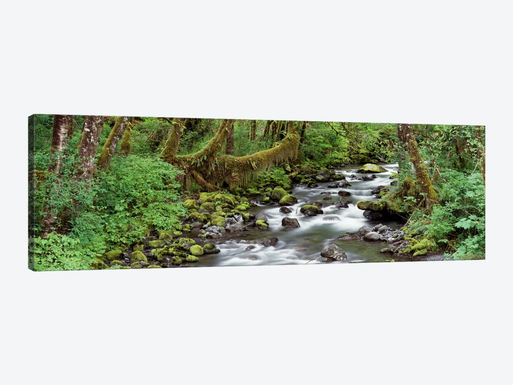Creek Olympic National Park WA USA by Panoramic Images 1-piece Canvas Art