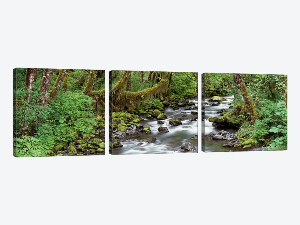 Creek Olympic National Park WA USA by Panoramic Images 3-piece Canvas Artwork