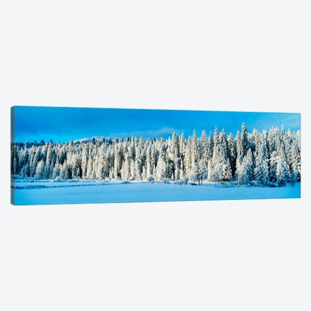 Winter Wawona Meadow Yosemite National Park CA USA Canvas Print #PIM2246} by Panoramic Images Canvas Wall Art