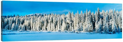 Winter Wawona Meadow Yosemite National Park CA USA Canvas Art Print