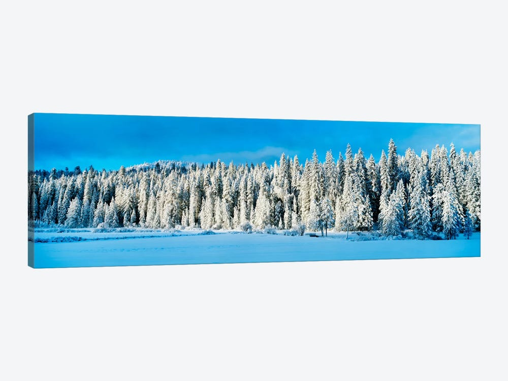 Winter Wawona Meadow Yosemite National Park CA USA by Panoramic Images 1-piece Canvas Art Print