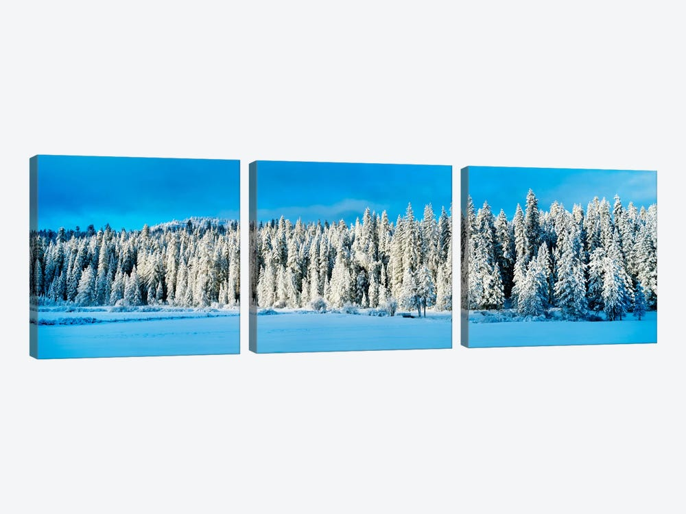Winter Wawona Meadow Yosemite National Park CA USA by Panoramic Images 3-piece Canvas Print