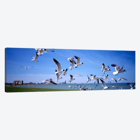 Flock of seagulls flying on the beach, New York State, USA Canvas Print #PIM2273} by Panoramic Images Canvas Wall Art