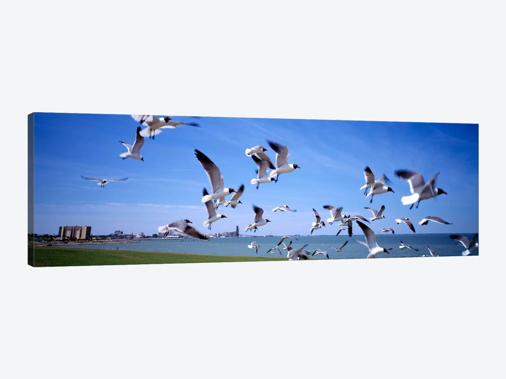 Flock of seagulls flying on the beach, New York State, USA by Panoramic Images 1-piece Art Print