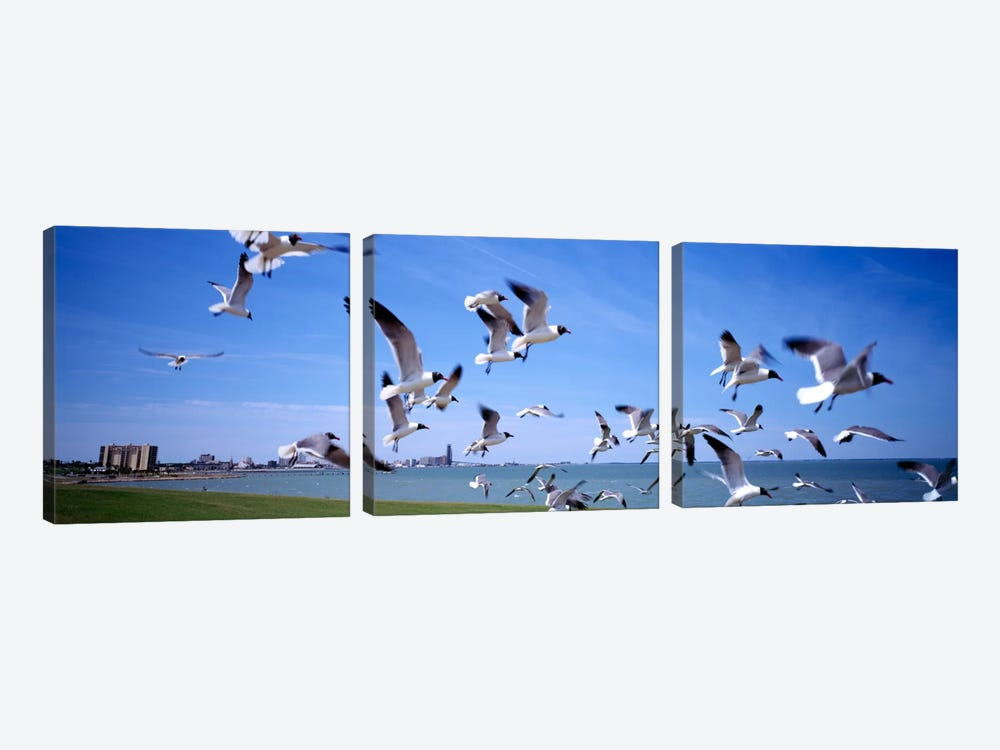 Flock of seagulls flying on the beach, New York State, USA by Panoramic Images 3-piece Canvas Art Print