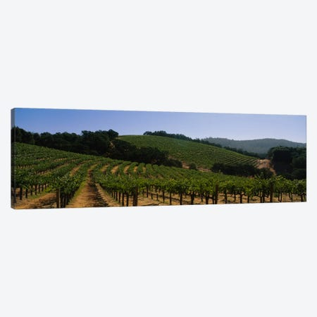 Hillside Vineyard Landscape, Napa Valley AVA, California, USA Canvas Print #PIM2279} by Panoramic Images Canvas Art