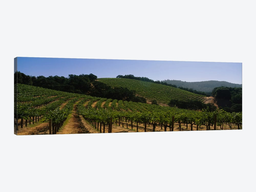Hillside Vineyard Landscape, Napa Valley AVA, California, USA by Panoramic Images 1-piece Canvas Print