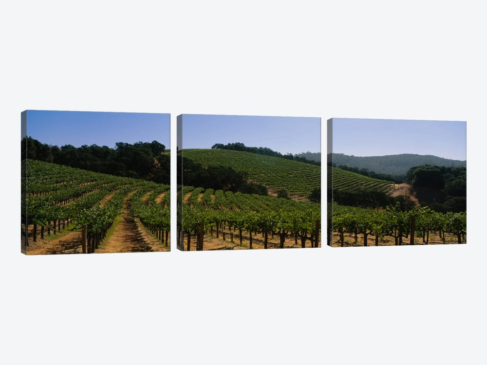 Hillside Vineyard Landscape, Napa Valley AVA, California, USA by Panoramic Images 3-piece Canvas Art Print