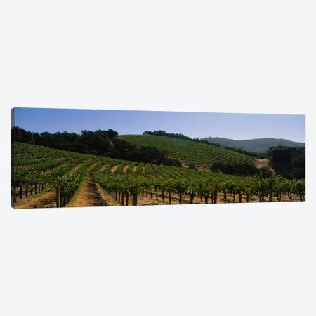 Hillside Vineyard Landscape, Napa Valley AVA, California, USA Canvas Print #PIM2279} by Panoramic Images Canvas Art