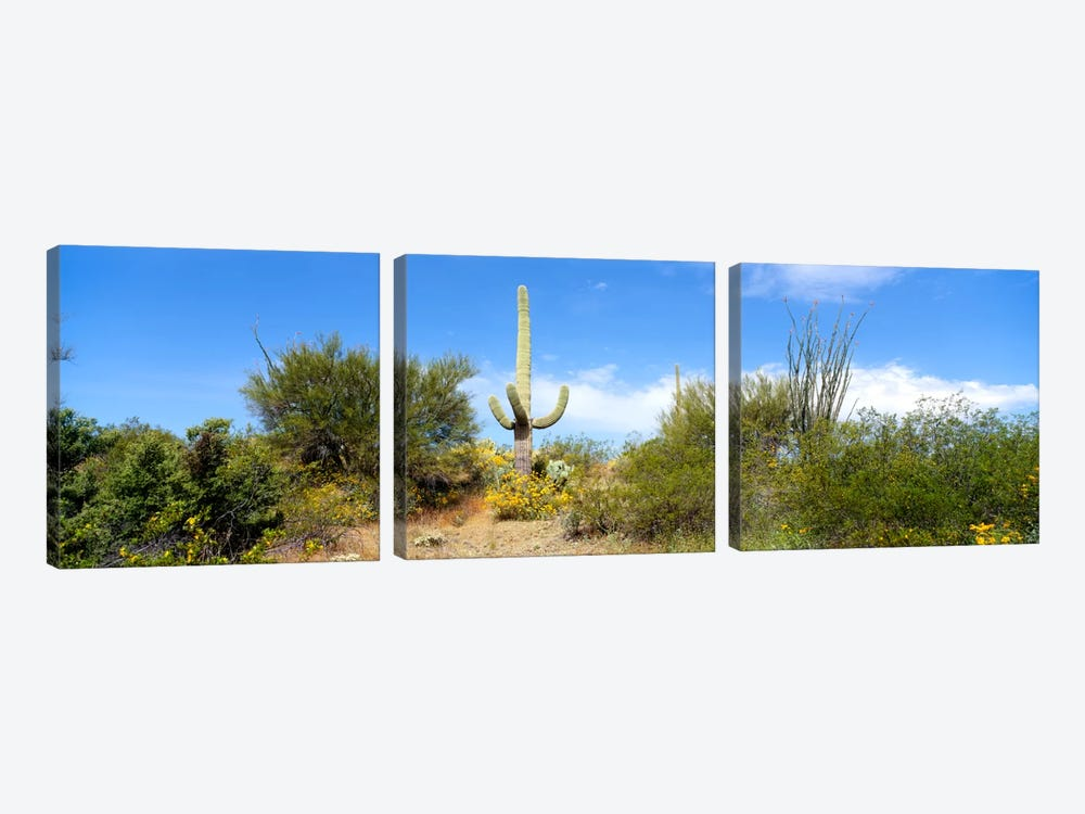 Low angle view of a cactus among bushes, Tucson, Arizona, USA by Panoramic Images 3-piece Art Print