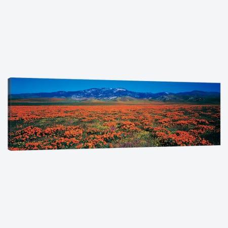 Antelope Valley California Poppy Reserve, Los Angeles County, California, USA Canvas Print #PIM2312} by Panoramic Images Canvas Print