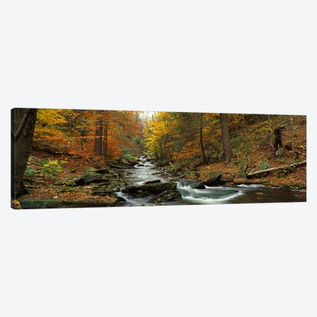 Fall Trees Kitchen Creek PA Canvas Print #PIM2371} by Panoramic Images Canvas Print