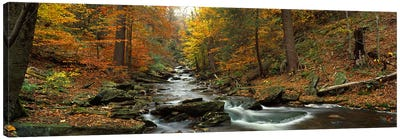 Fall Trees Kitchen Creek PA Canvas Art Print