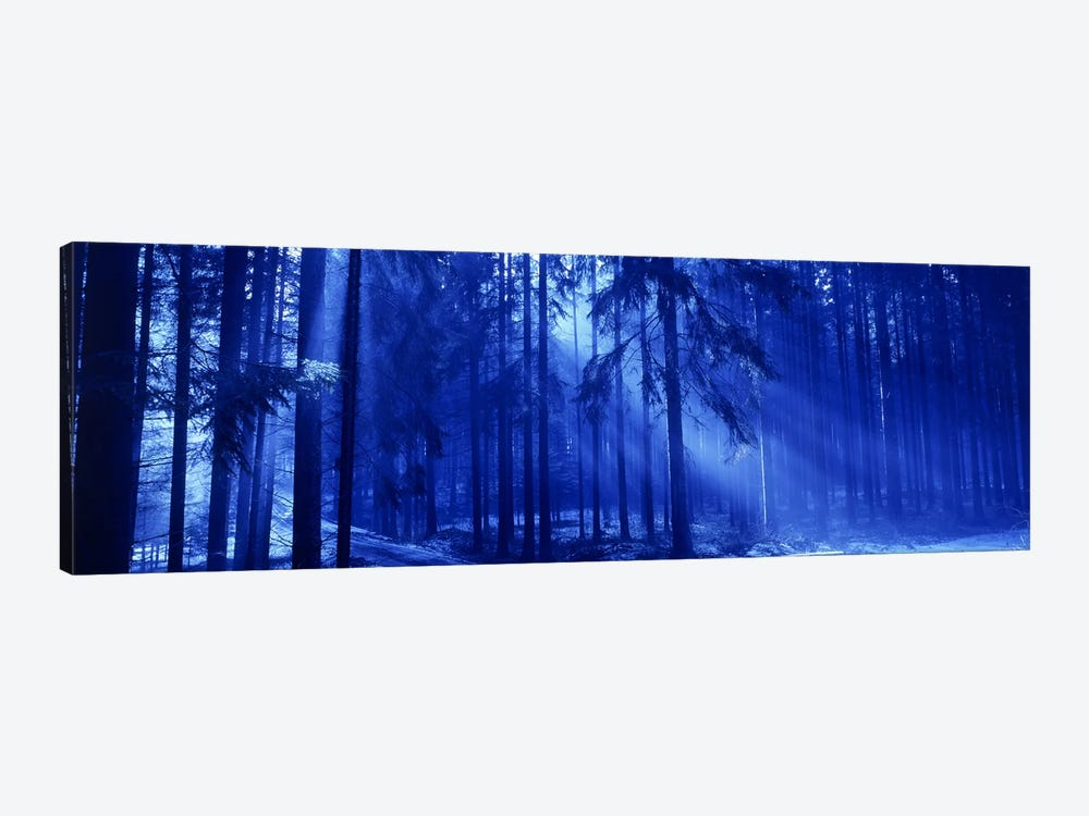 Trees Titisee Germany by Panoramic Images 1-piece Canvas Print