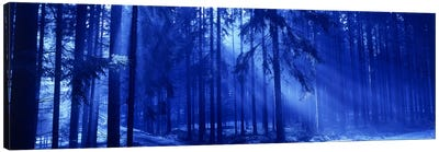 Trees Titisee Germany Canvas Art Print