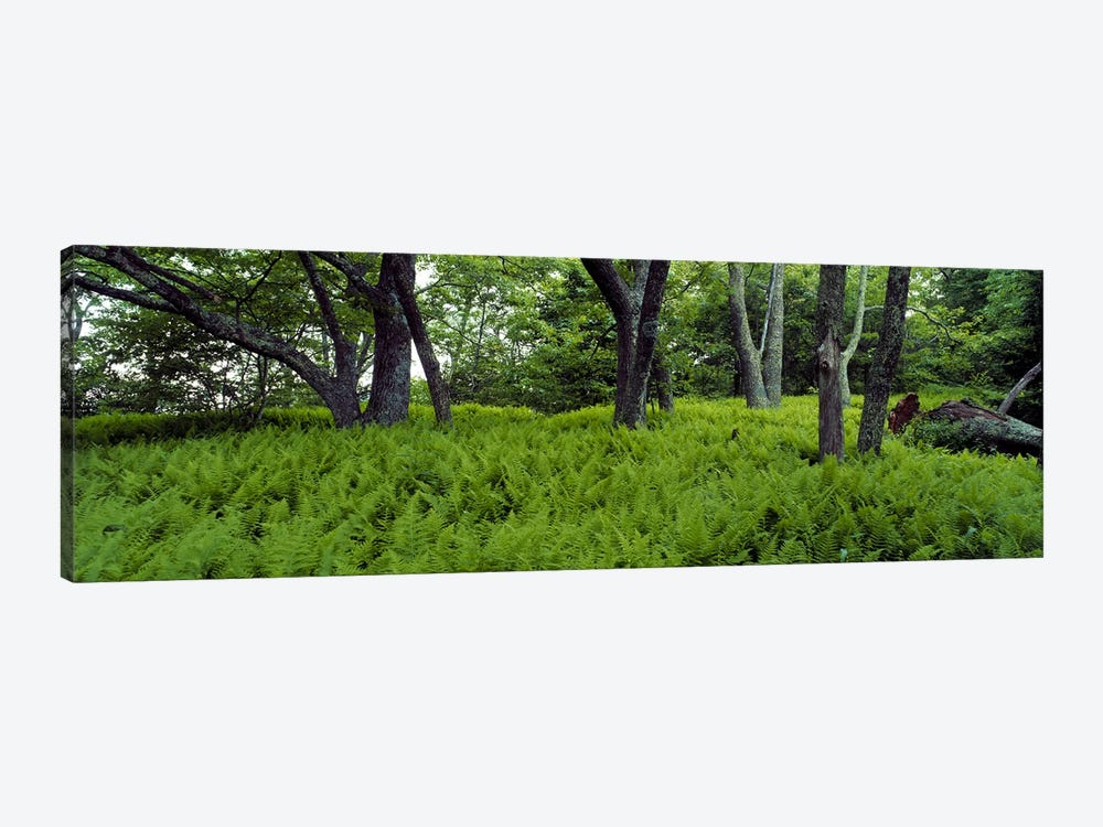 Trees in a forest, North Carolina, USA by Panoramic Images 1-piece Art Print
