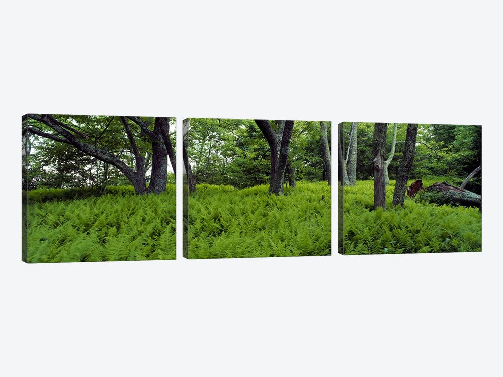 Trees in a forest, North Carolina, USA 3-piece Art Print