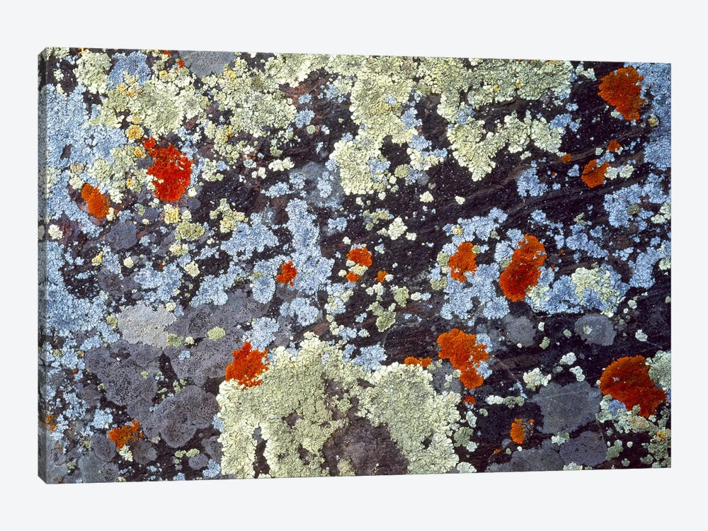 Lichens on Rock CO USA by Panoramic Images 1-piece Canvas Art Print