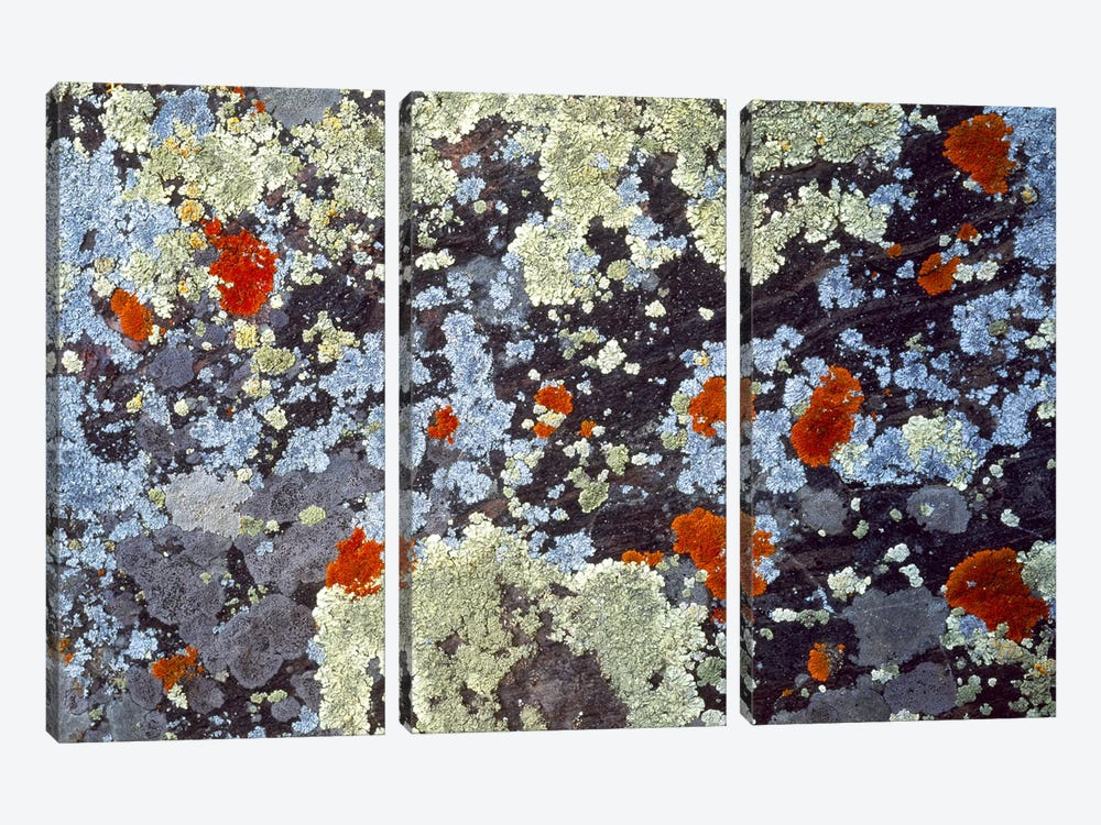 Lichens on Rock CO USA by Panoramic Images 3-piece Art Print
