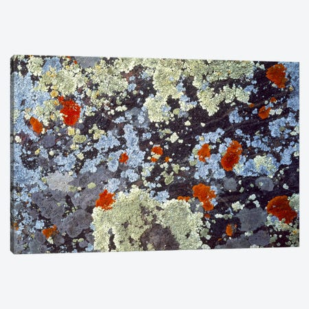 Lichens on Rock CO USA 3-Piece Canvas #PIM2387} by Panoramic Images Canvas Art Print