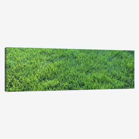 Grass Sacramento CA USA Canvas Print #PIM2389} by Panoramic Images Canvas Wall Art