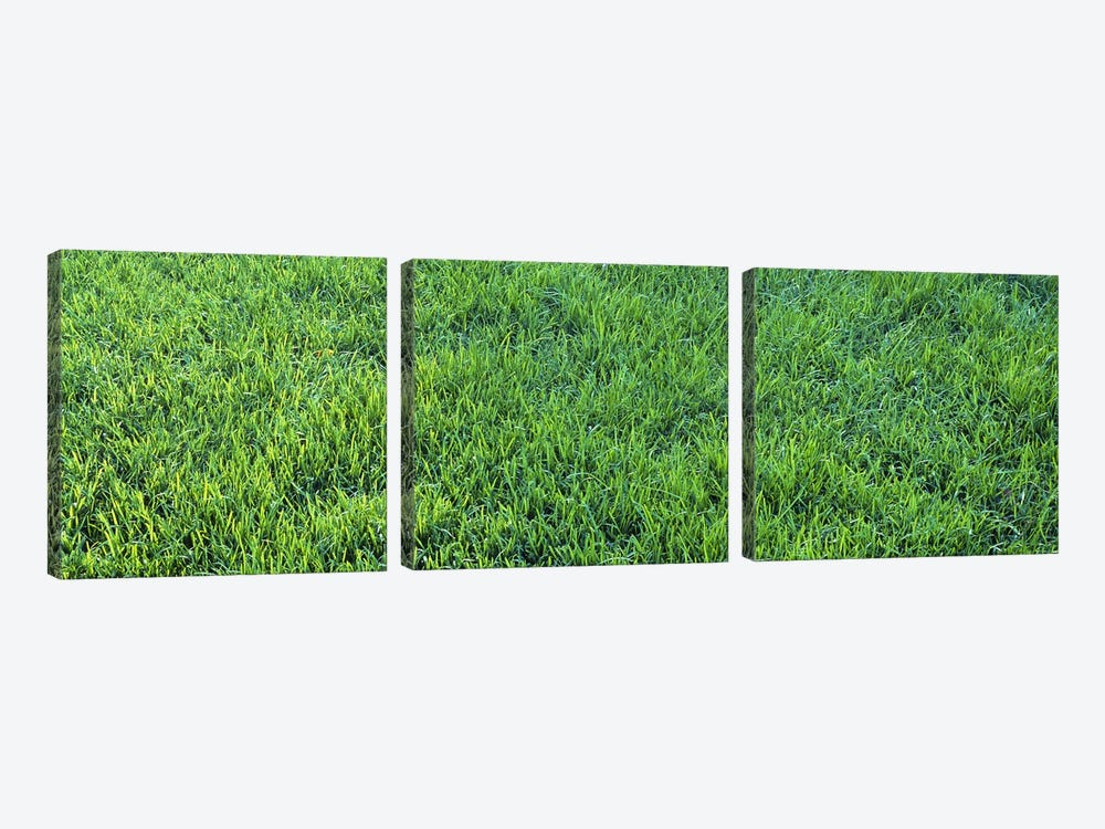 Grass Sacramento CA USA by Panoramic Images 3-piece Canvas Print