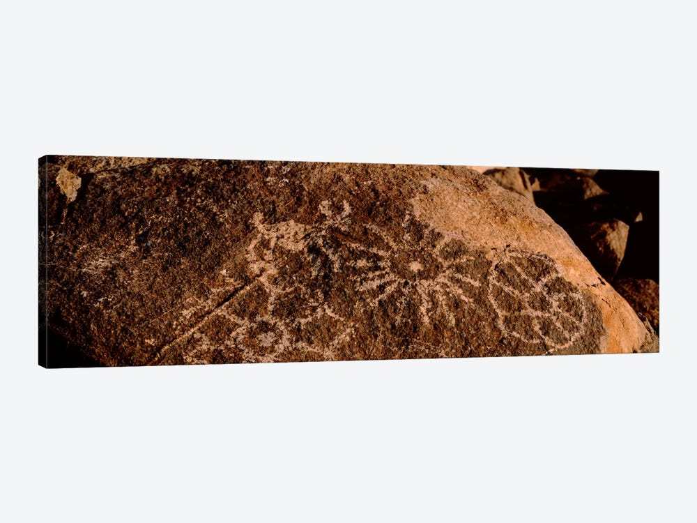 Close-up of petroglyphs on a rock, Saguaro National Park, Tucson, Arizona, USA by Panoramic Images 1-piece Canvas Art