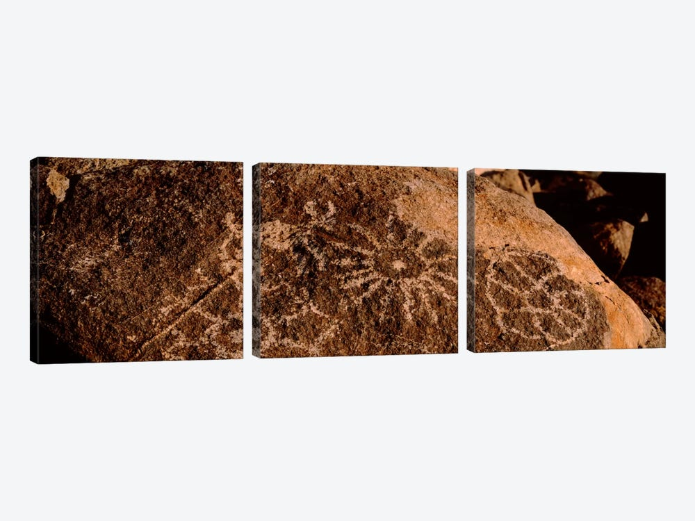 Close-up of petroglyphs on a rock, Saguaro National Park, Tucson, Arizona, USA by Panoramic Images 3-piece Canvas Wall Art