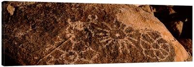Close-up of petroglyphs on a rock, Saguaro National Park, Tucson, Arizona, USA Canvas Art Print