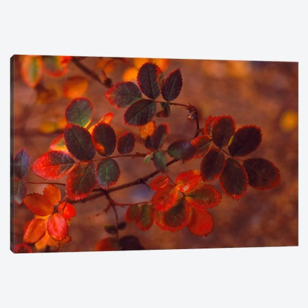 Autumn Leaves In Zoom, Colorado, USA Canvas Print #PIM2393} by Panoramic Images Canvas Print