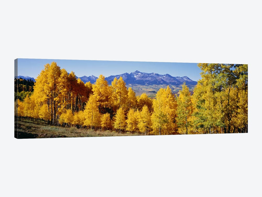Fall Aspen Trees Telluride CO by Panoramic Images 1-piece Canvas Print