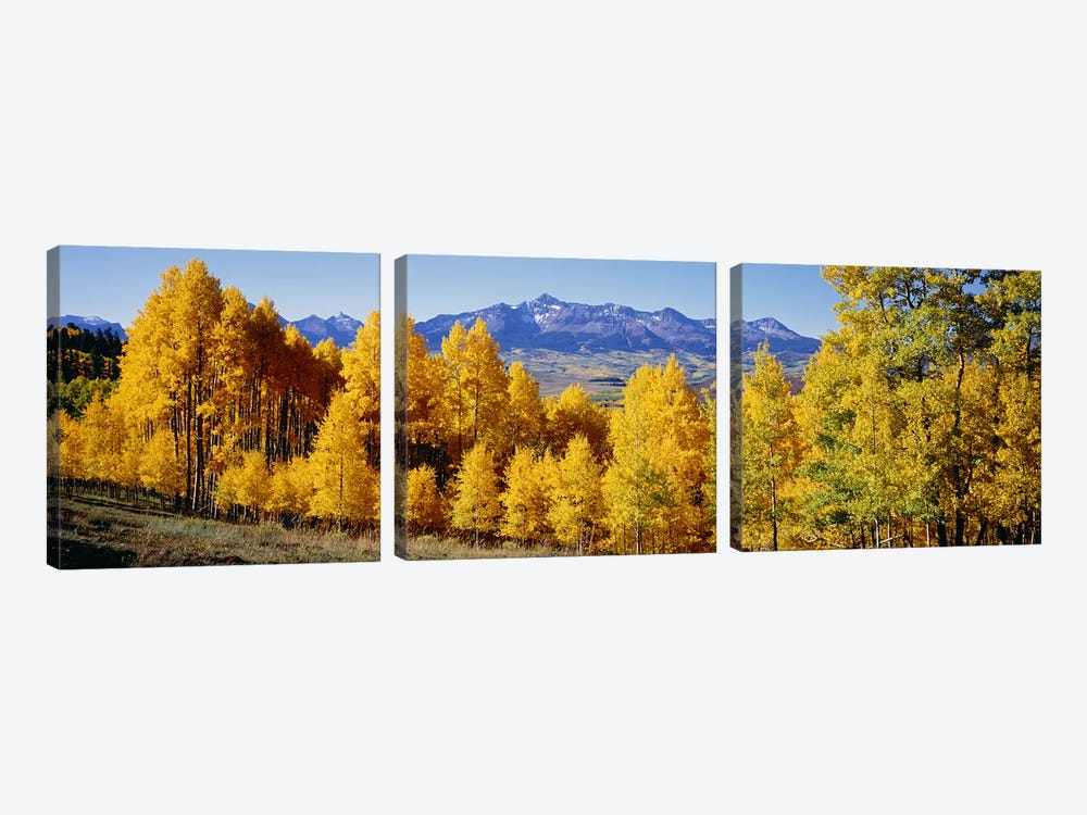 Fall Aspen Trees Telluride CO by Panoramic Images 3-piece Canvas Print