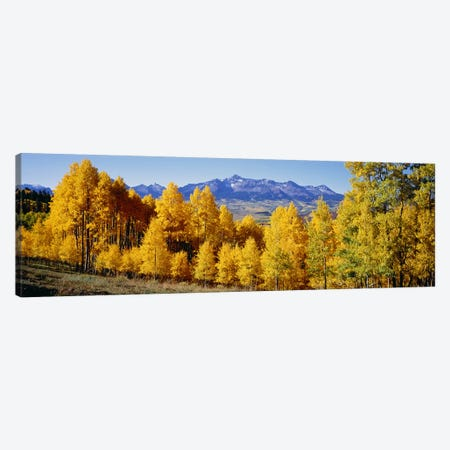 Fall Aspen Trees Telluride CO Canvas Print #PIM2398} by Panoramic Images Canvas Print